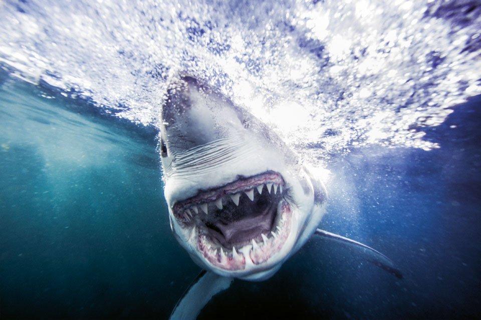 Bildband Haie